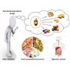 Food composition structure and physiological functions